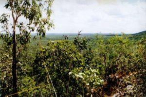 eucalyptusbos