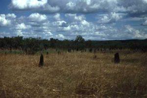 termiet_plat-3