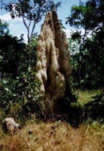 termiet_wit_1