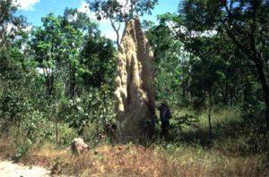 termiet_wit_2